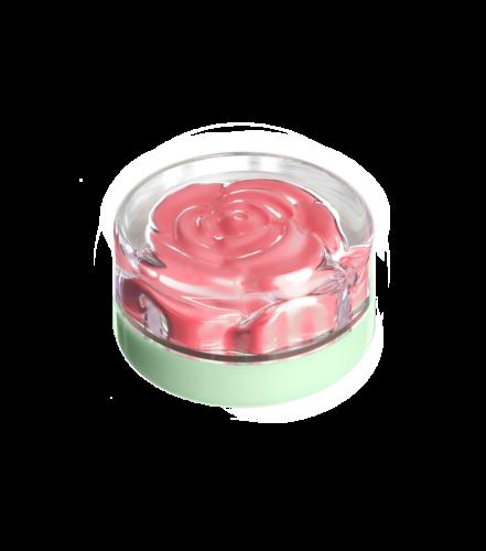 blush-garden-monday-rose (3)