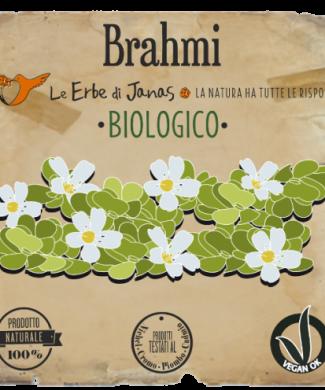 Brahmi reduced-500x717